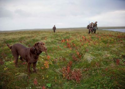 dog-winth-hunters-hunting-725x483